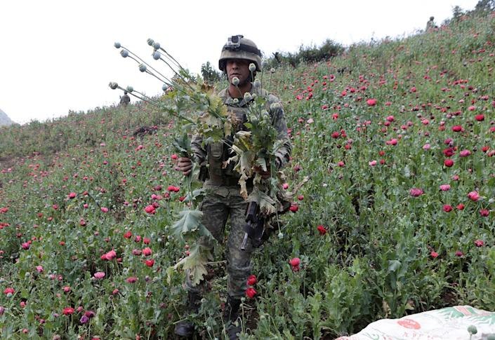 <p>A soldier holds poppy plants after a poppy field was destroyed during a military operation in the municipality of Coyuca de Catalan in Mexico, April 18, 2017. (Photo: Henry Romero/Reuters) </p>