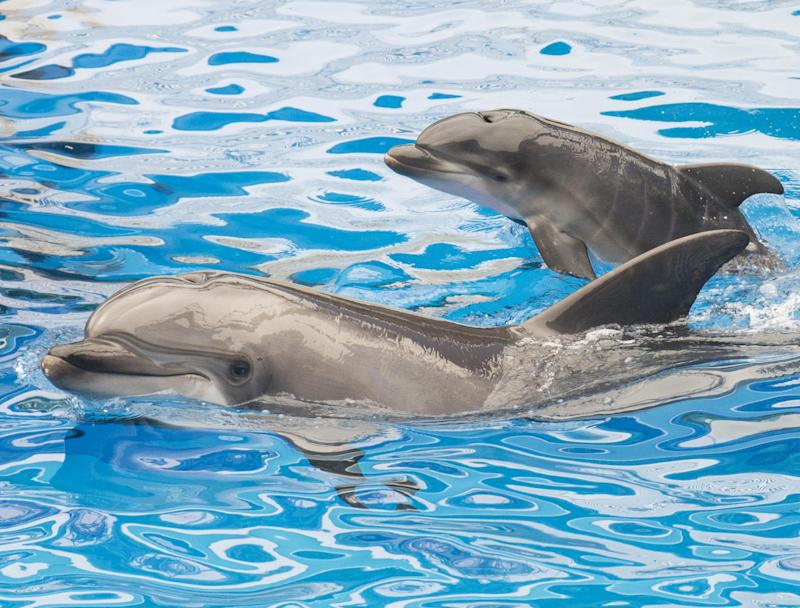 A dolphin and her calf at SeaWorld San Diego: Getty Images
