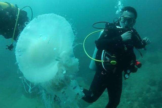 Huge jellyfish makes diver's day