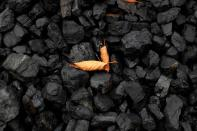 FILE PHOTO: A leaf sits on top of a pile of coal in Youngstown, Ohio