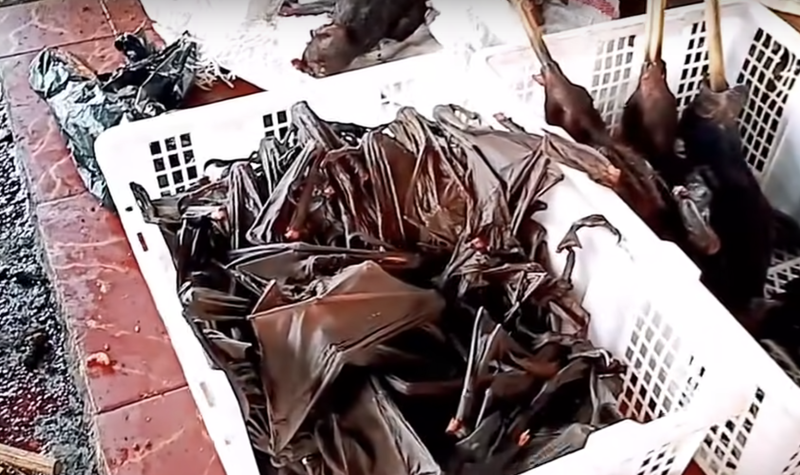 Bats at the market feature in the video that claimed to be in Wuhan. Source: Facebook