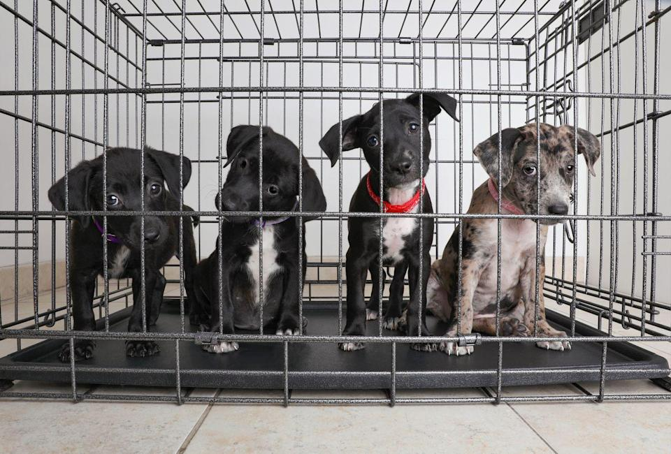 <p><strong>State Pet: Colorado Shelter Pets <br><br></strong>Colorado and a few other states have made their state pet shelter animals, a strong reminder to adopt and not shop... because look at those little faces. </p>
