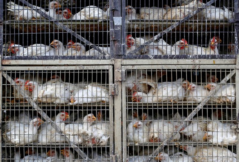 India chicken sales slashed almost 50% by false virus rumour - Godrej Agrovet