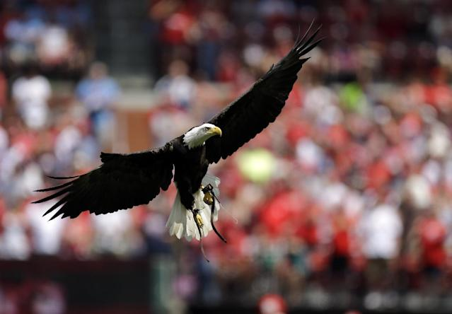 A bald eagle flies into Busch Stadium during a ceremony before the start of a baseball game between the St. Louis Cardinals and the New York Yankees Monday, May 26, 2014, in St. Louis. (AP Photo/Jeff Roberson)