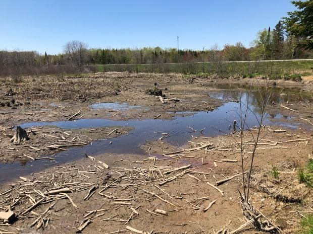 More than half of a metre of water was drained from the Ferris Street wetland by the province, according to Nature Trust of New Brunswick. (Gary Moore/CBC - image credit)