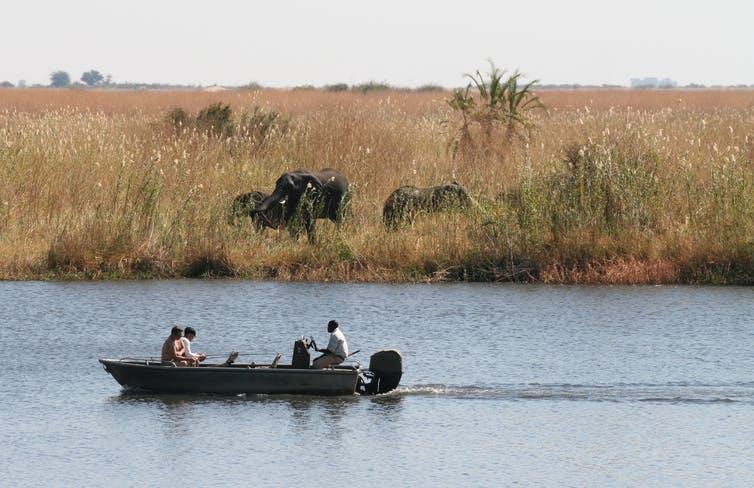 A boat sails past dry grassland with elephants.
