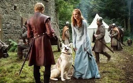 Sansa direwolf called Lady - Credit: HBO