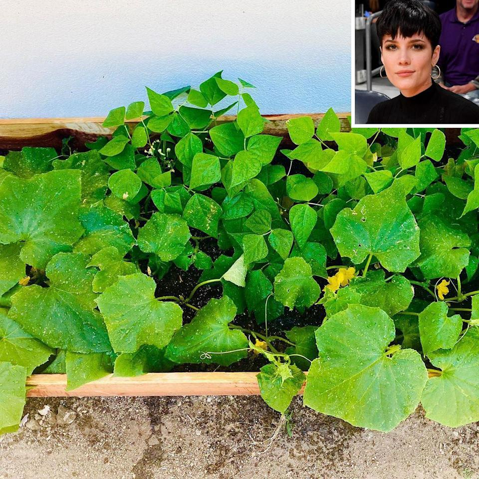 """<p>The """"You Should Be Sad"""" singer turned to gardening during quarantine as a means of maintaining her """"emotional balance,"""" and enjoying """"moments of simplicity.""""</p> <p>""""This is one of the many new hobbies I have acquired as the world turns differently,"""" <a href=""""https://www.instagram.com/p/CBTpcO0pxAm/"""" rel=""""nofollow noopener"""" target=""""_blank"""" data-ylk=""""slk:she wrote"""" class=""""link rapid-noclick-resp"""">she wrote</a>, noting that she's in the process of building more garden bed boxes. """"It is rewarding in ways I could have never imagined.""""</p>"""