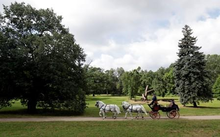 Employees of The National Stud Kladruby nad Labem ride a carriage at a farm in the town of Kladruby nad Labem