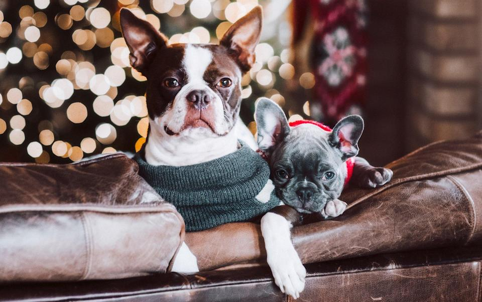 How To Keep Your Pets Safe During The Holidays According To Experts