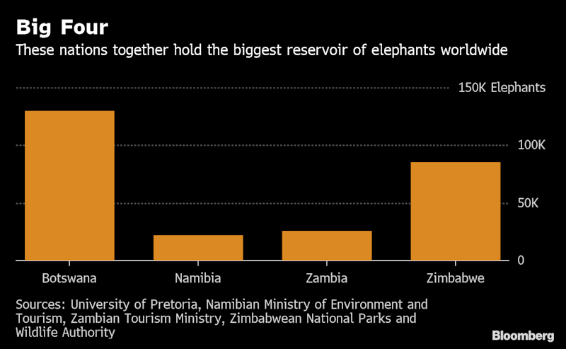 Image result for Why Southern African Nations Are So Concerned About Elephants