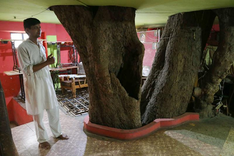 Yogesh Kesharwani stands on the first floor of their home in Jabalpur, built around a fig tree (AFP Photo/Uma Shankar MISHRA)