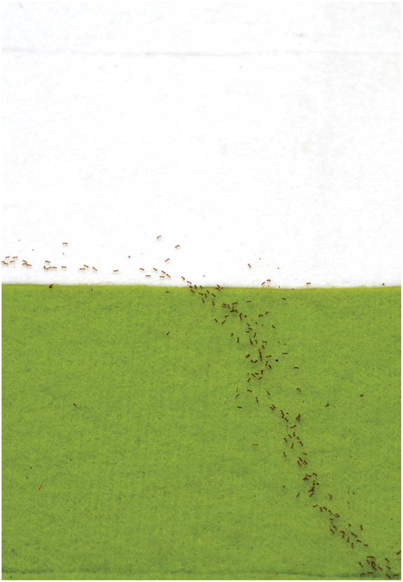 Ants 'Use Math' to Find Fastest Route