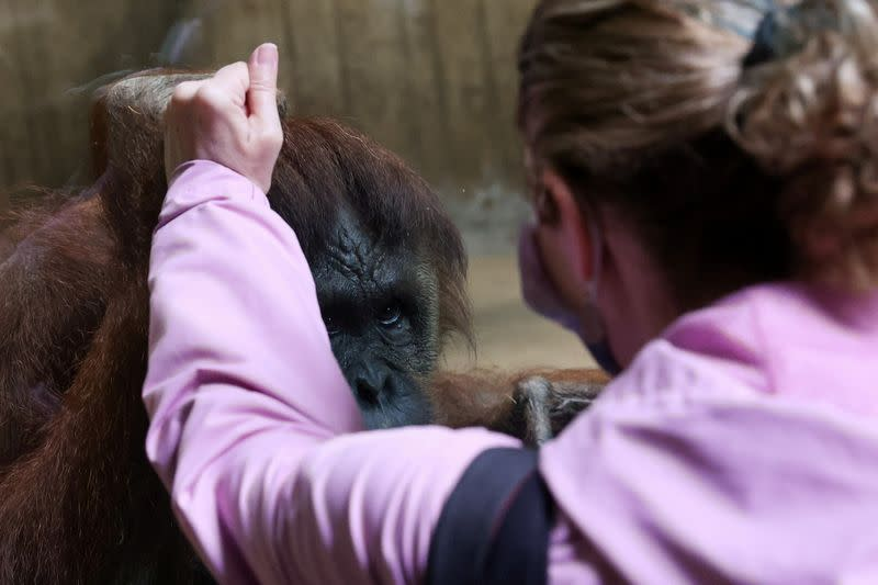 U.S. National Zoo in Washington reopens, despite expanded COVID-19 measures