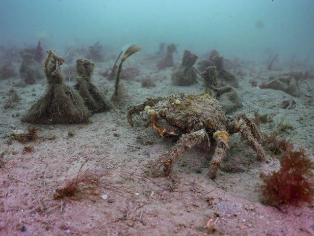 Seed bags sitting on the seabed