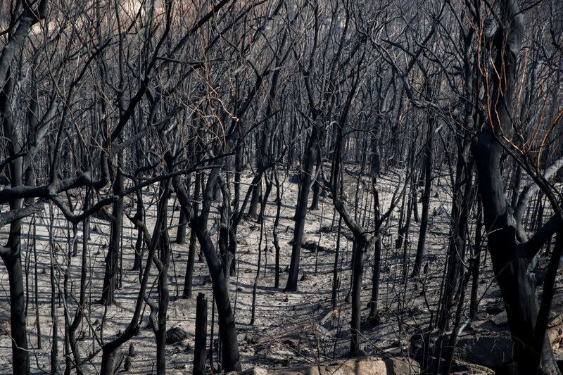 Dead trees mark the scorched landscape surrounding the Kangaroo Valley Bush Retreat after a wildfire in Kangaroo Valley