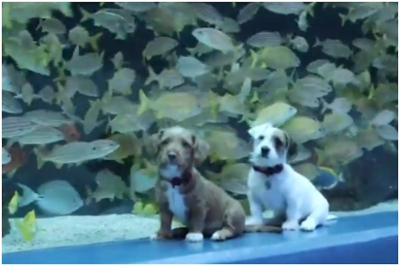 Watch: Puppies' Day Out in Deserted Aquarium after Coronavirus Forced Humans Indoor in US