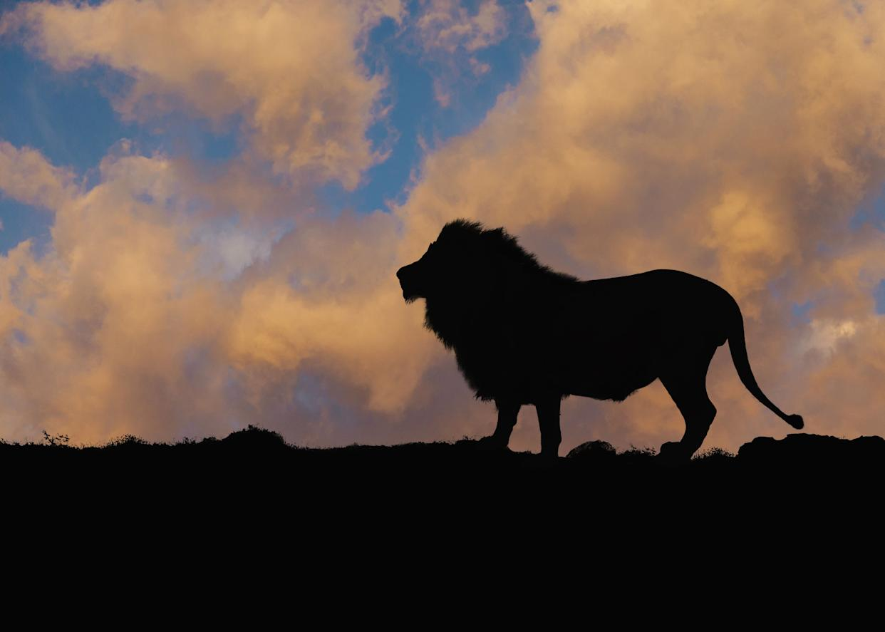Silhouette of lion against blue sky and clouds