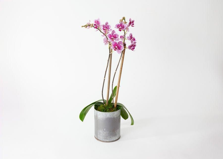 <p>Everyone will love this delicate <span>UrbanStems The Skye</span> ($55).</p>