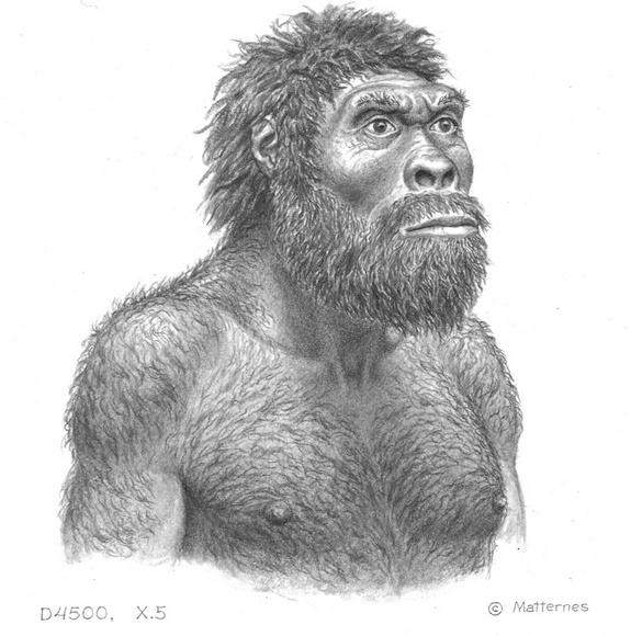 """An artist's conception revealing what """"Skull 5"""" may have looked like some 1.8 million years ago when he (the scientists suspect the remains come from a male) lived."""