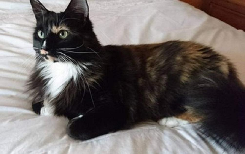 Katie, his cat, was originally rescued from the charity (Cats Protection)