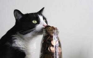 Cat sniffing a jar of pennies