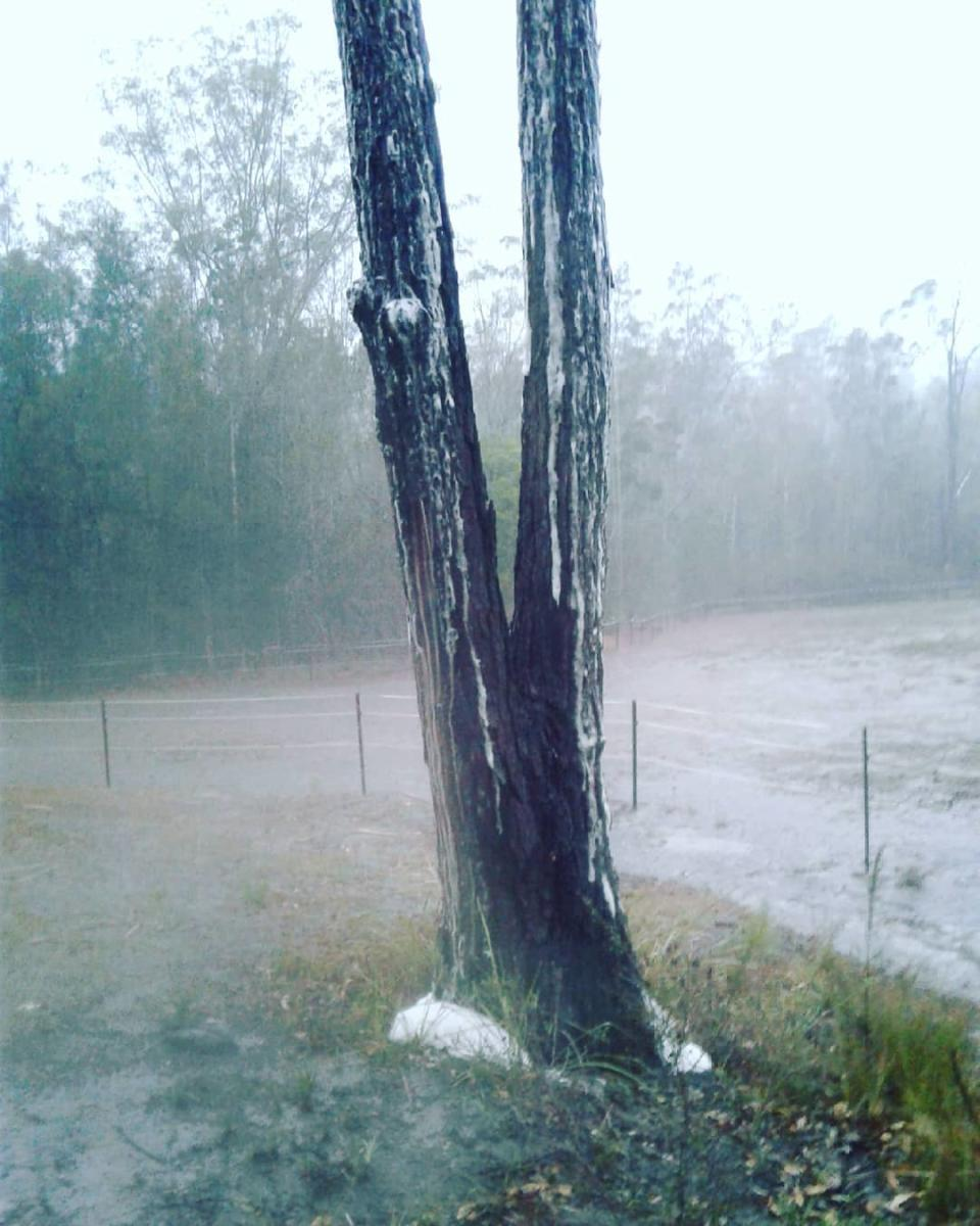 A woman said hundreds of trees started foaming as heavy rain fell. Source: Facebook