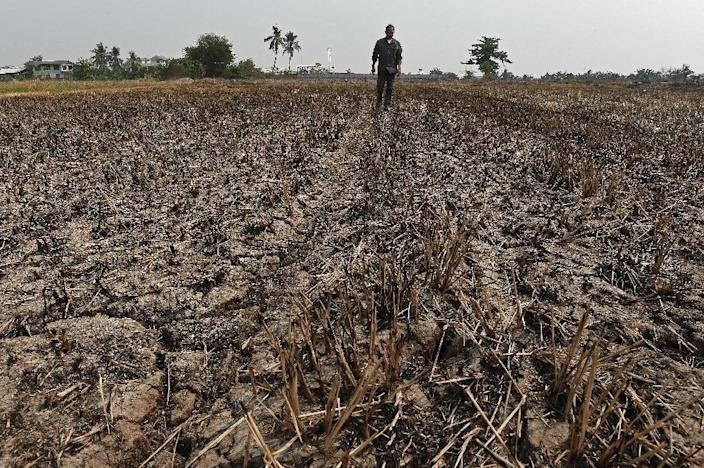 Thailand's vital farming sector has been hit hard in recent months by one of the worst droughts in decades (AFP Photo/Christophe Archambault)