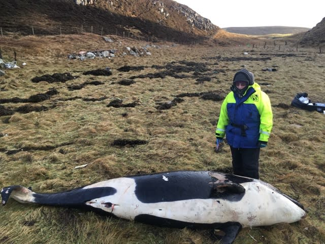 Young orca thrown 25ft by Storm Caroline washed up on beach