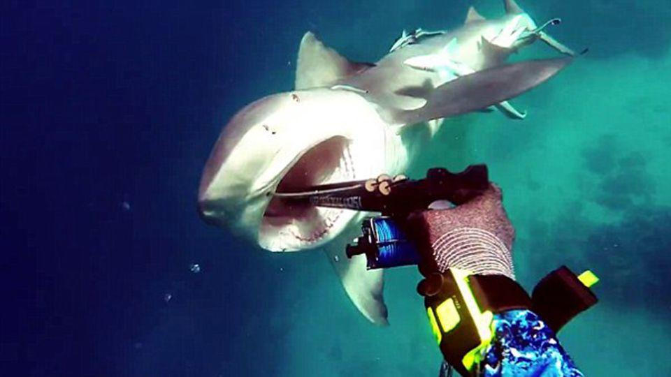 The bull shark can be seen charging at Kerry Daniel moments before he is able to jam his gun into its mouth. Source: Facebook