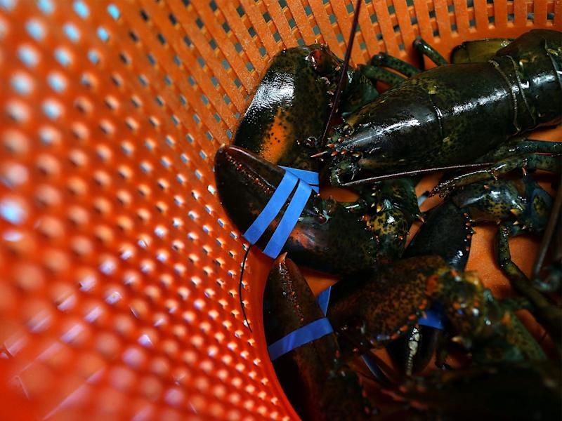 Thousands have signed a petition for lobsters to be protected by law: Getty