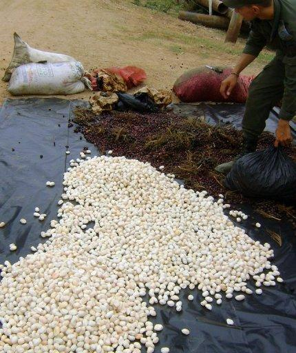 This picture, released by Colombian Enviromental Police, shows seized Iguana eggs that were found on a bus travelling from Cartagena to Sinceleno, Bolivar department, in recent days. Green iguanas, hicoteas, turtles and capybaras are in danger in Colombia during easter, where the ancient tradition of eating these animals instead of red meat is observed