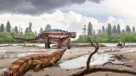 A life reconstruction of the newly discovered Cretaceous Period armored dinosaur Akainacephalus johnsoni, which lived 76 million years ago in Utah, surrounded by the crocodilian Denazinosuchus is seen in this image provided July 19, 2018. Andrey Atuchin/Denver Museum of Nature & Science/Handout via REUTERS
