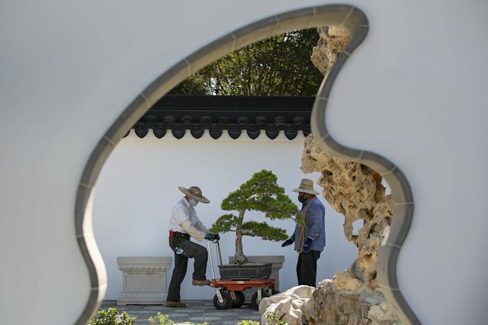 "Che Zhao Sheng places a penjing on its stand in preparation for the Chinese Garden expansion's opening. <span class=""copyright"">(Josie Norris/Los Angeles Times)</span>"