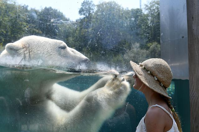 <p>A woman looks through the glass of the enclosure of a Polar bear as he cools off in the water at the zoo in Mulhouse, France on Aug. 3, 2018, as parts of Europe continue to swelter in an ongoing heatwave. (Photo: Sdbastien Bozon/AFP/Getty Images) </p>
