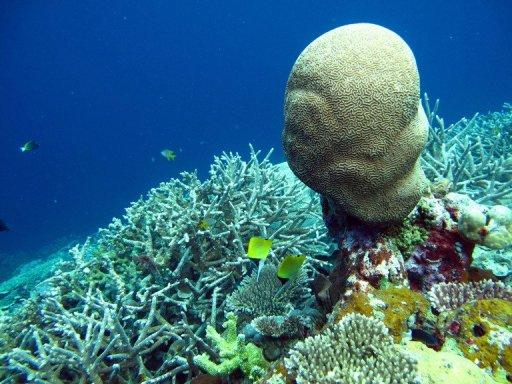 More than 85% of reefs in Asia's 'Coral Triangle' are directly threatened by human activities, a new report claims