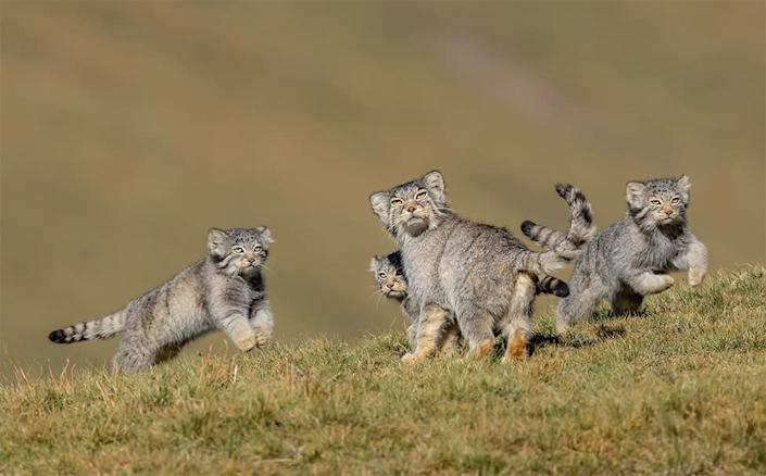 When mother says run by Shanyuan Li, China