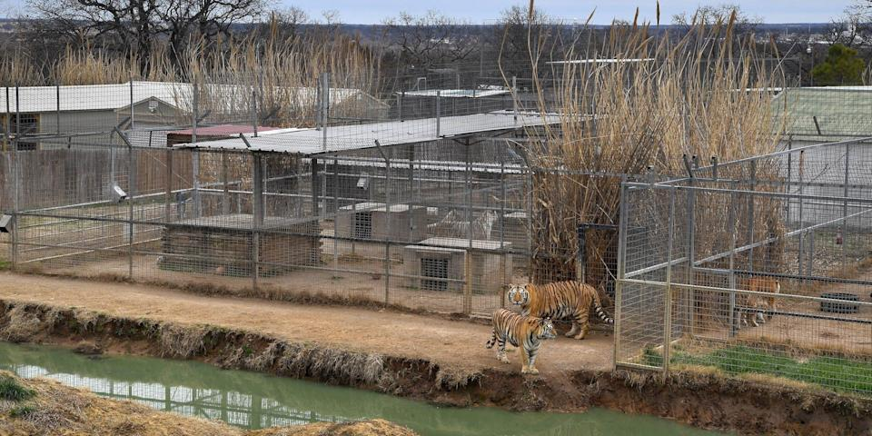 Some of the enclosures for the tigers were larger than others at the Greater Wynnewood Exotic Animal Park on February 9, 2019.