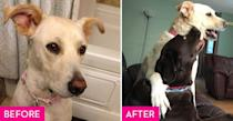 <p>A rescue group found 18-month-old Maggie in an alley in Texas extremely emaciated and pregnant with ten puppies. Maggie's unfortunate early circumstances have left her with some ongoing health issues but that doesn't stop her from hatching schemes to escape her backyard or from playing with her two rescue brothers. </p>