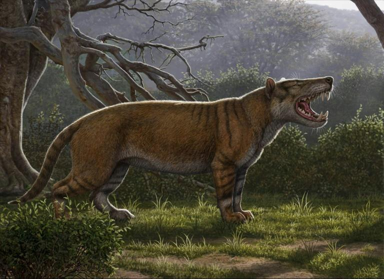 A Simbakubwa kutokaafrika, a gigantic mammalian carnivore that lived 22 million years ago in Africa and was larger than a polar bear