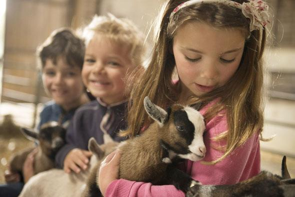 Guests at The Olde House enjoy a cuddle with two-week-old pygmy goat kids in the Pets' Corner. From left to right: Thomas Crooks, Sam White and Evelyn White.