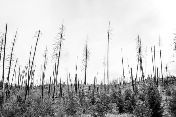 Matt Lazzarotto's image of a burned forest near Barriere, B.C., was one of four B.C. photographs selected for the global climate change summit to be held in Glasgow, Scotland, in November. (Matt Lazzarotto - image credit)