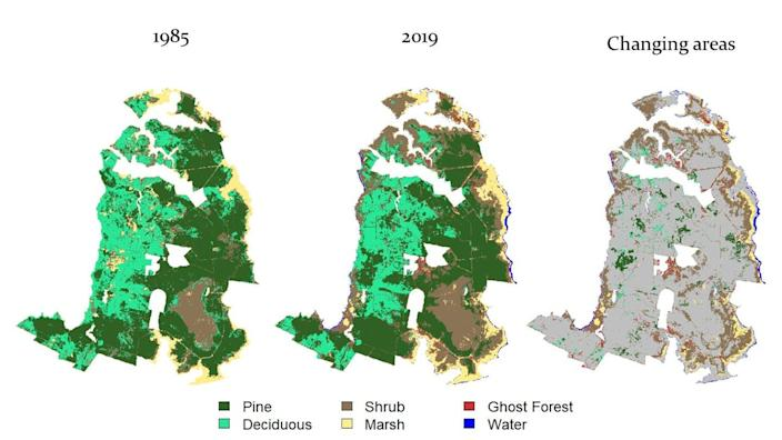 Saltwater intrusion is rapidly killing forests along the North Carolina coast.