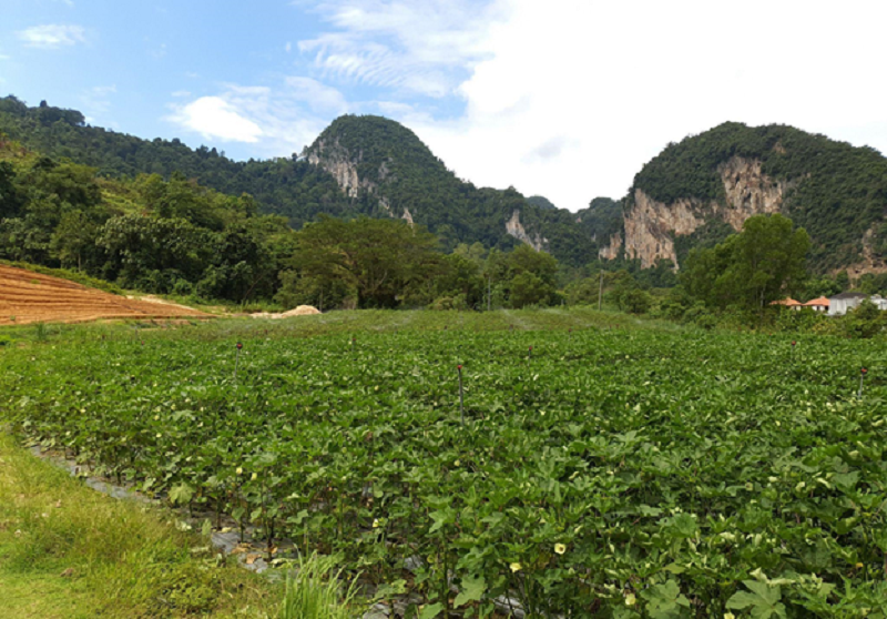 Sunway City Ipoh's organic farm, located adjacent to The Banjaran Hotsprings Retreat, produces pesticide-free fruits and vegetables with fresh water from the mountains. ― Picture courtesy of Sunway