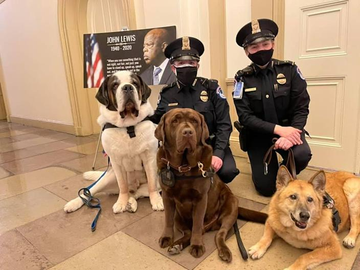 Officer Clarence and other comfort dogs at the U.S. Capitol (Courtesy of Deputy Chief William Gordon)