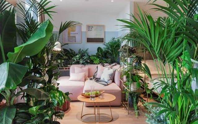 One of the houseplant hotel suites that opened this week