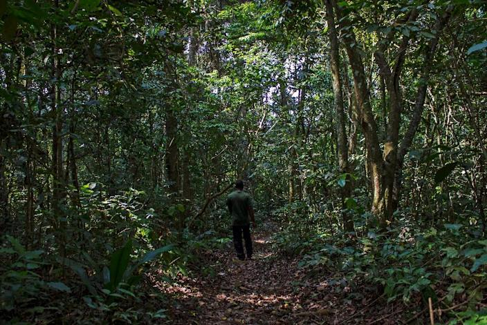 An innovative program to pay Ugandan villagers not to cut down trees shows promise in cutting back carbon emissions, researchers say (AFP Photo/ISAAC KASAMANI)