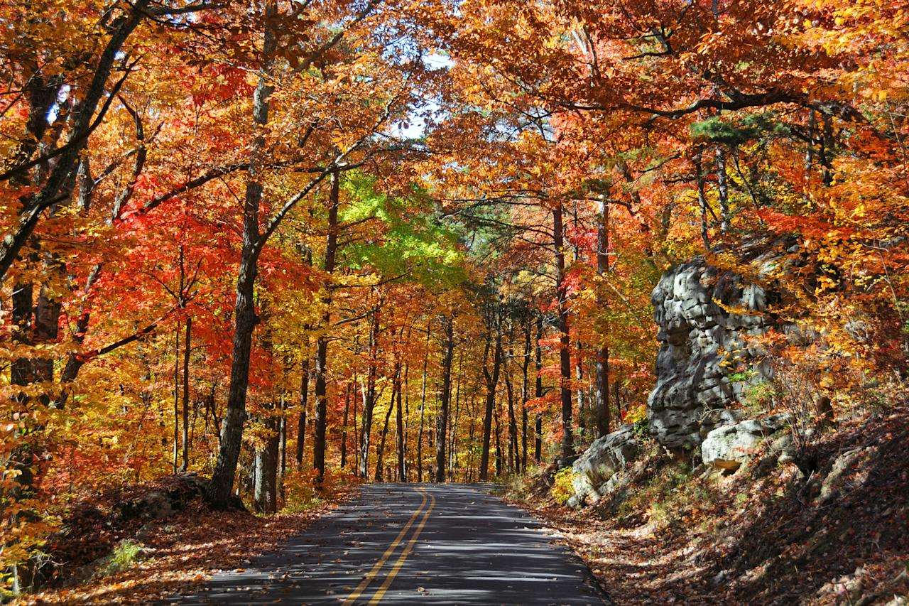"<p>Lookout Mountain Scenic Parkway spans from Gadsden, Alabama to Chattanooga, Tennessee. The 93-mile parkway runs along side waterfalls, canyons, small towns and villages, state and national parks, and some of the state's most colorful fall trees.</p> <p>For more information: <a href=""http://www.discoverlookoutmountain.com/lookoutmountainparkway.shtml"" target=""_blank"">Lookout Mountain Scenic Parkway</a></p>"