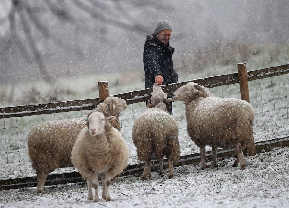 A man petting sheep during a snow shower in Mudchute Park and Farm, London (Photo: PA)