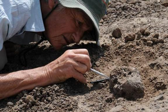 Meave Leakey carefully excavates the new face KNM-ER 62000. Researchers might be able to reconstruct what this new human species might have eaten by looking at its teeth and jaws.